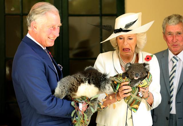 Những khoảnh khắc hài hước không đỡ nổi của bà Camilla - mẹ chồng thị phi nhất Hoàng gia Anh, đã xem là không thể không cười - Ảnh 4.