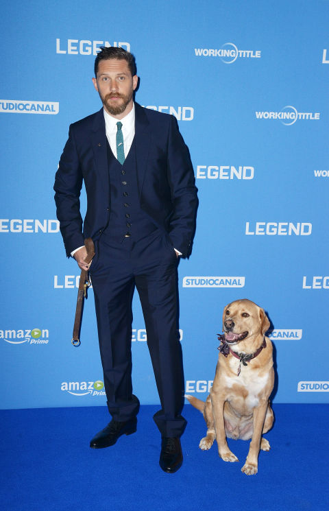 Tom Hardy's final CBeebies Bedtime Story was a fitting tribute to his dog Woody on National Dog Day