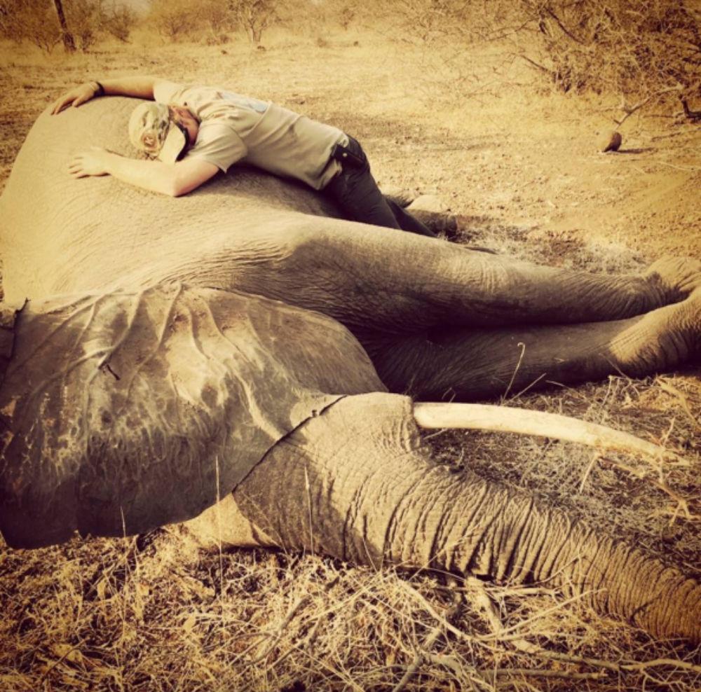 Маленький принц и его родители плюс сестричка - Страница 2 1449153330-princeharry-elephant