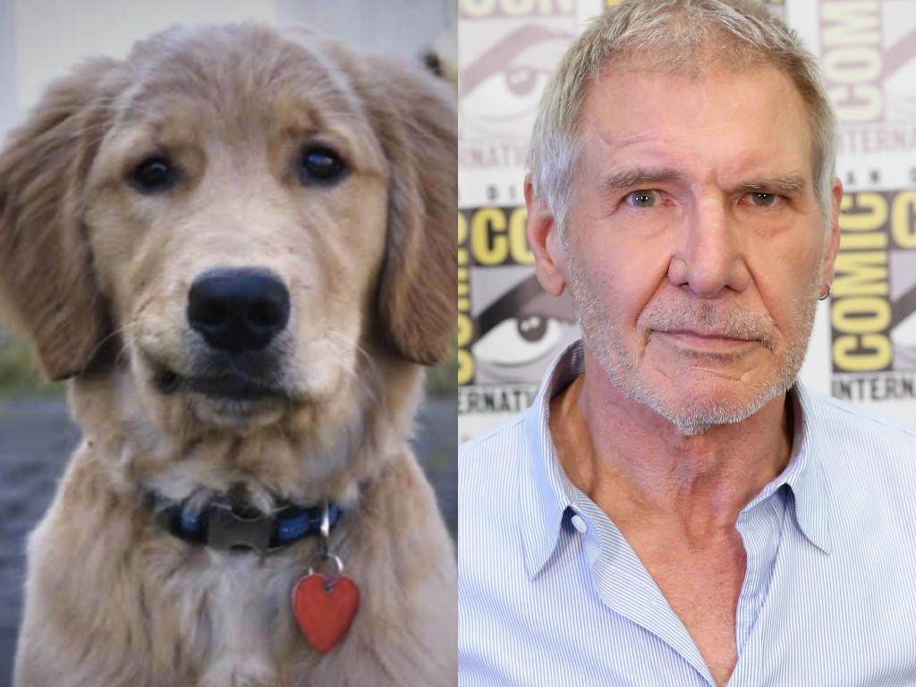 animals famous celebrities animal celebrity dog freakily