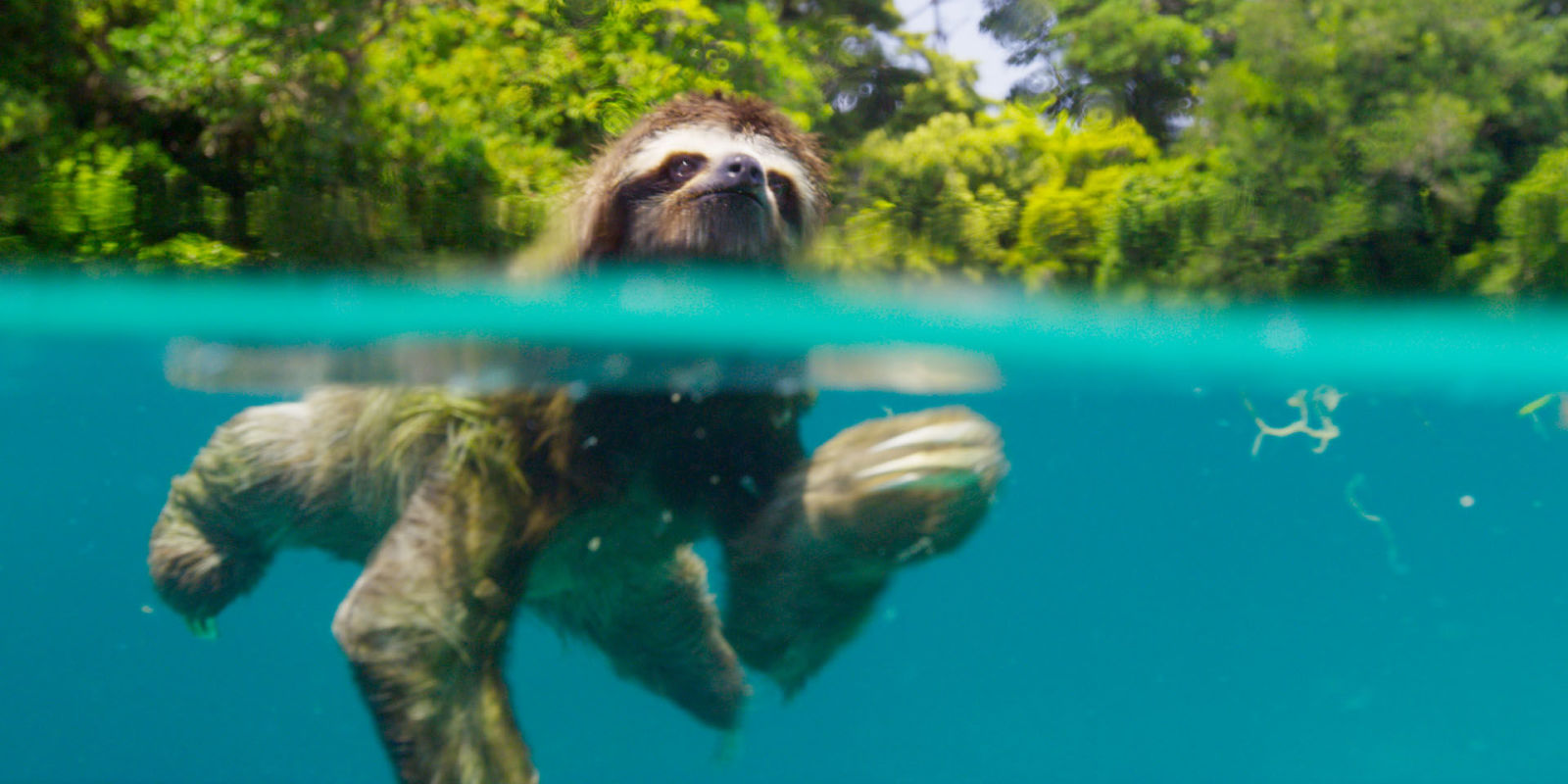 Planet earth ii season 1 episode 2 2016 - 8 Reasons Why Bbc One S Planet Earth Ii Will Be The Absolute Best Thing You See On Tv This Year