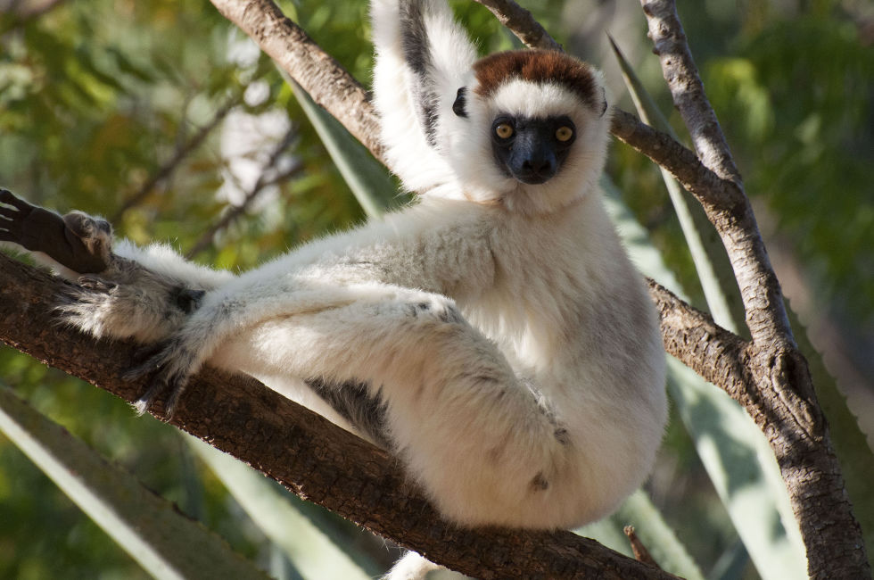 The show takes us to Madagascar to hang out with lemurs – there are about 100 different types, and they're not found anywhere else on Earth.