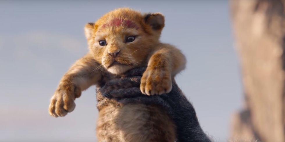 Dalam trailer pertama yang telah dirilis, kita akan dibuat gemas dengan kelahiran Simba kecil (dok. Disney)